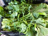 broccoletti_romaneschi